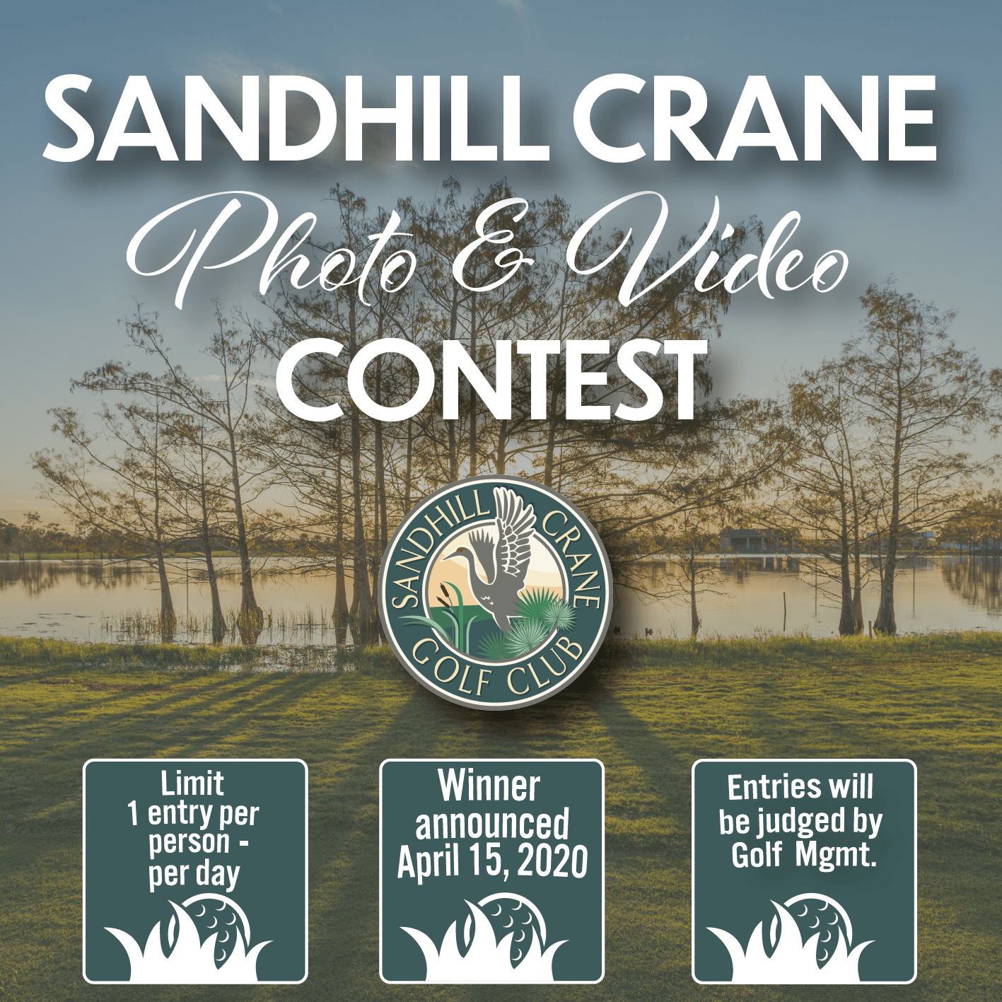 Sandhill Crane Photo and Video Contest